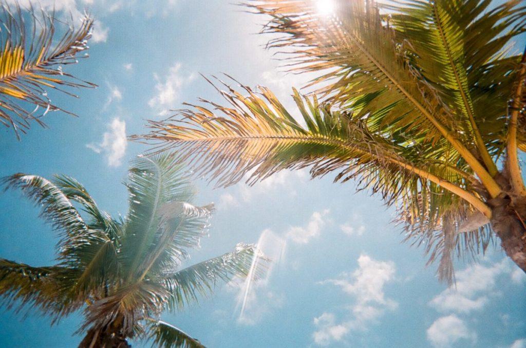 Florida palm trees and blue sky